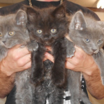 Vet-Checked KITTENS $89